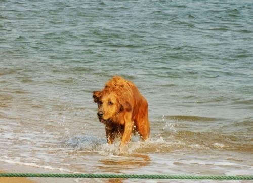 顾姓女宝宝名字【周易测名字】2018年12月出生属狗名字带水旁会不会有落水狗的意义