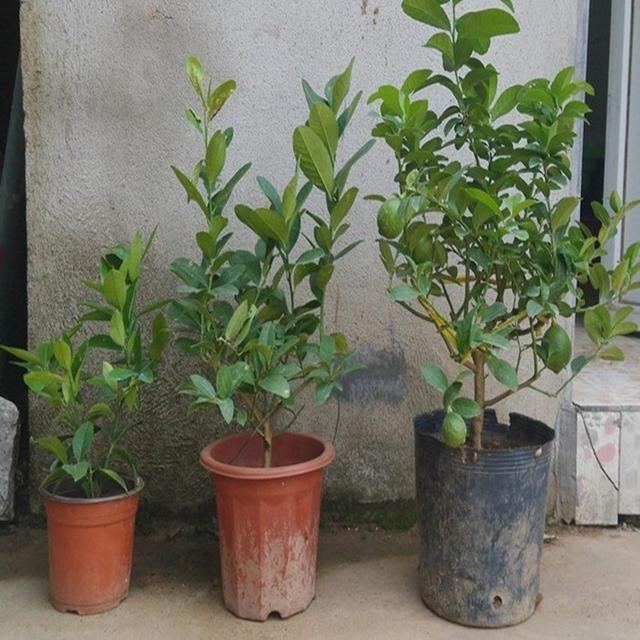 8种适合懒人养的盆栽植物,旺财又养人,网友说:还是蚊虫的克星