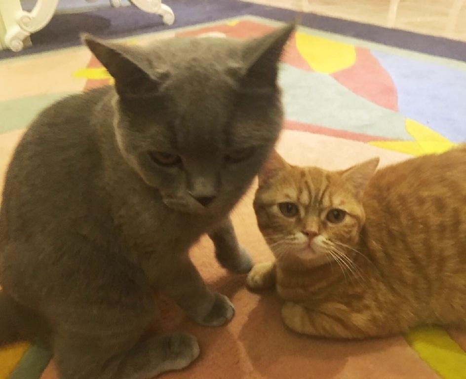 徐嬌的貓坐姿霸氣,易烊千璽的貓愛學習,劉亦菲的貓自帶仙氣