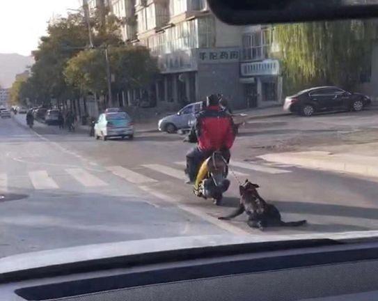 那只曾被人用车恶意拖行的流浪狗小黑,现在还好吗? <span> </span>