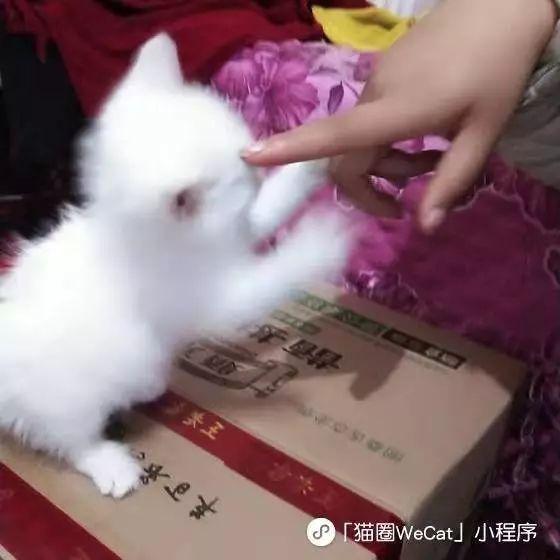 人与动物交配撸撸网_以往都是人撸猫,这只猫却开始撸上了人类.| 猫圈话题