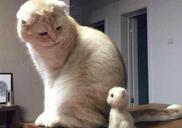 """猫咪掉的毛被主人做成小玩偶,猫咪懵逼:""""我什么时候生的""""?"""