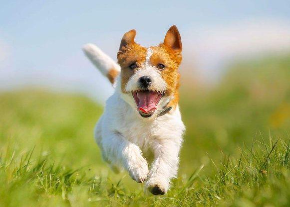 """萌知识丨吃钙片就算补钙?别闹了! """"不会补钙""""是造成90%的狗狗都缺钙的罪"""
