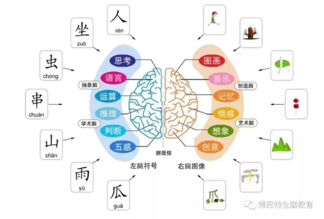 大脑记忆的原理是什么_大脑前庭是什么部位