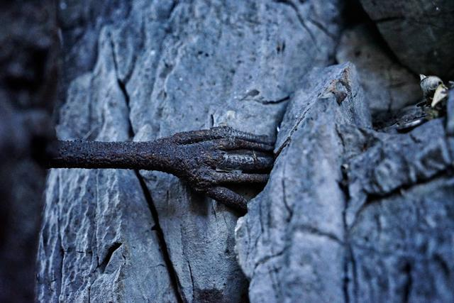 奇闻!云南一棵3000年的菩提树长出一只手游客打飞滴去一睹真容