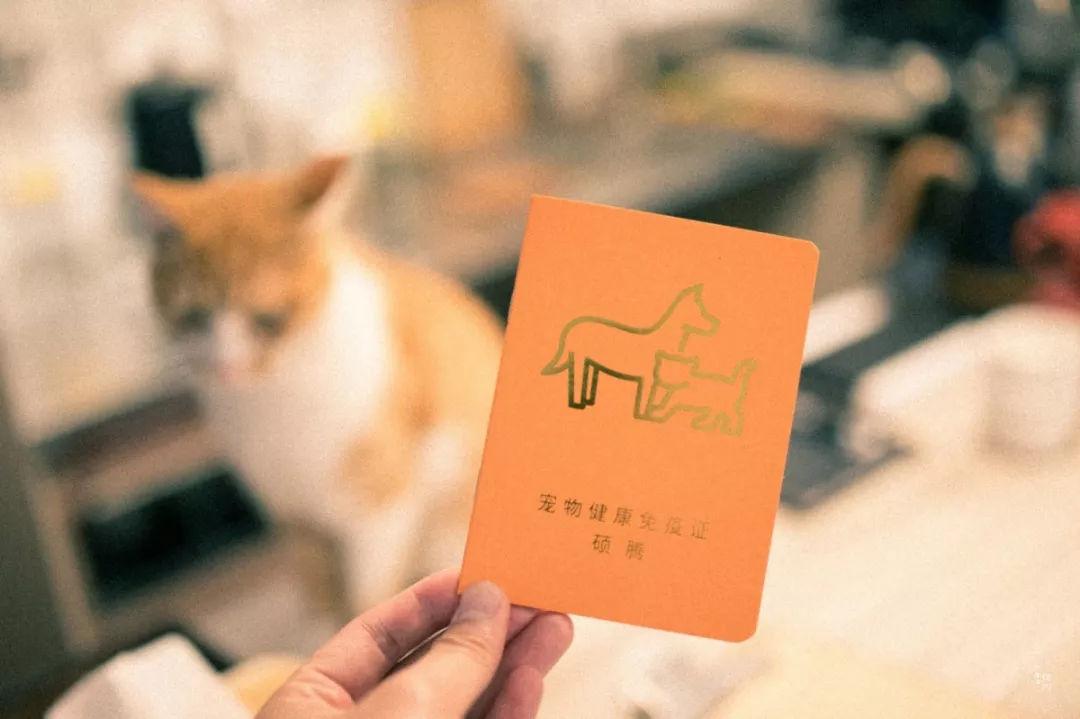撸经典小�_藏身小河直街内的这家撸猫馆,开门那刻,心就