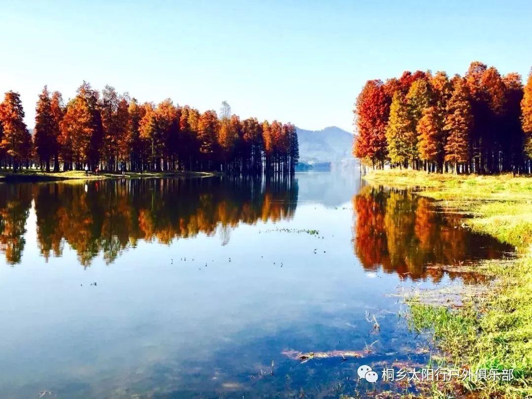 【胜景绝配】12月12日赏四明湖水上红杉林,游五龙潭7d图片