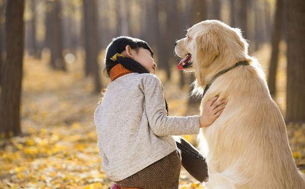 关于宠物的几个小故事,看完你是哭了还是笑了