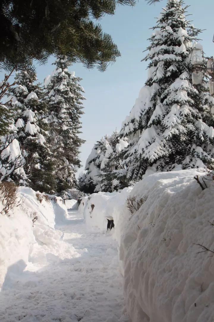 【毛毛大雪】圍爐賞雪,最美的風景在身邊