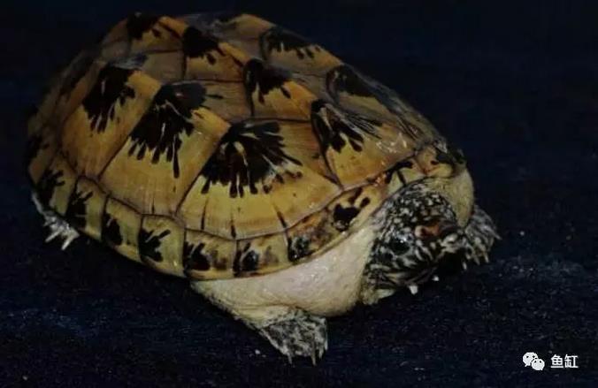十大全球最受欢迎的发财龟