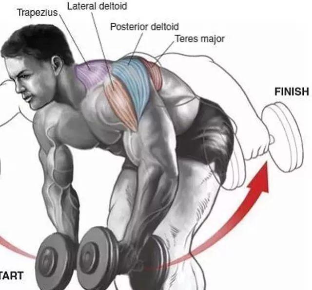 全套健身房训练动作图解,让你从此告别瞎练!