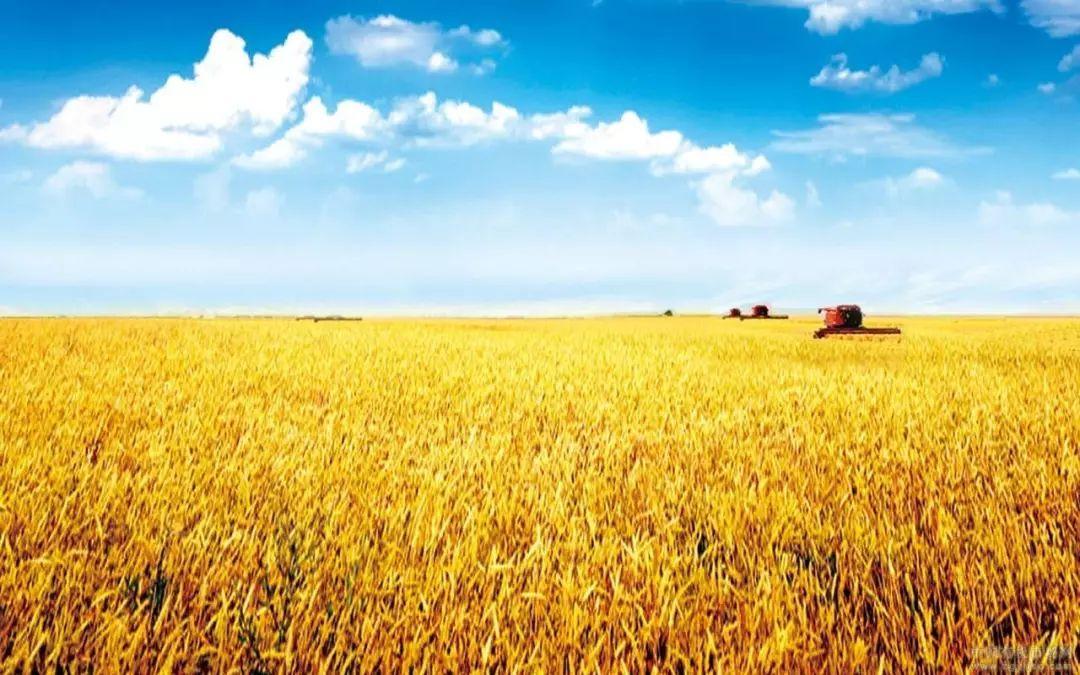 纳雍县2018年政策性农业保险工作开展情况