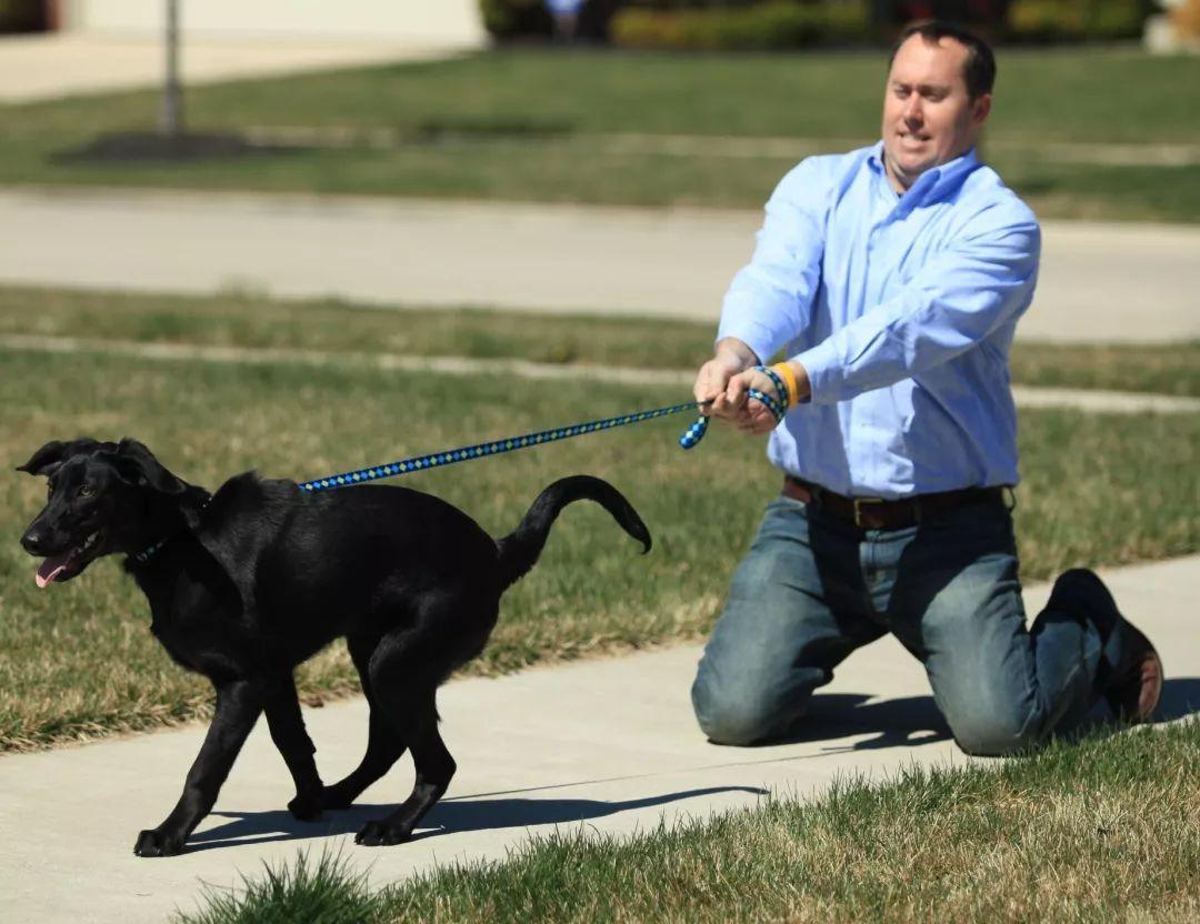 饲养宠物犬需要注意,哪些法律事项