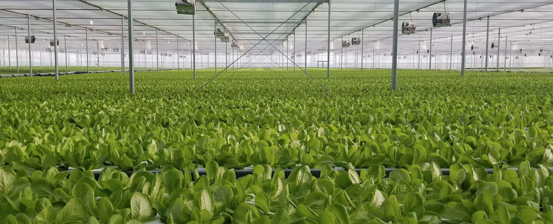 国内最大植物工厂投产,蔬菜喝营养液年产19茬,比有机蔬菜更便宜?-