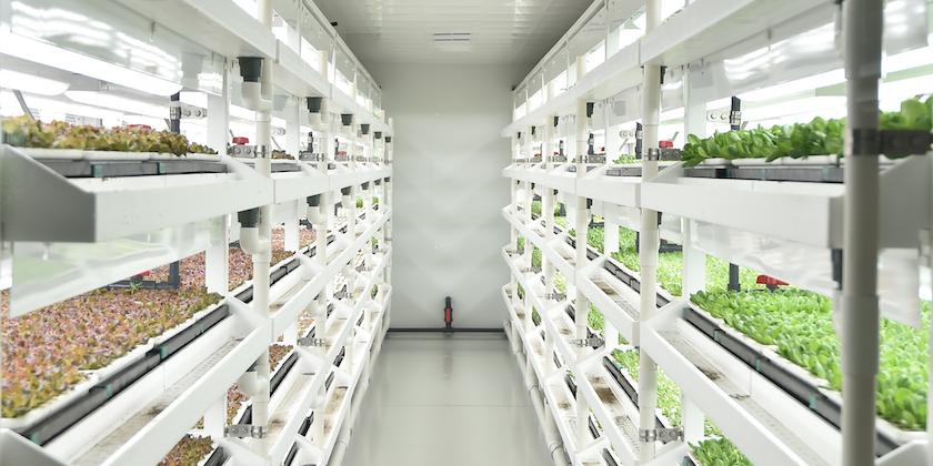 国内最大植物工厂投产,蔬菜喝营养液年产19茬,比有机蔬菜更便宜?