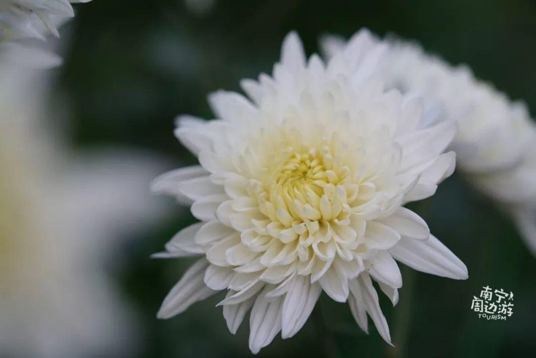 南宁这里开满了鲜花,太美啦 关键还免费 感觉像是春天来啦