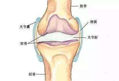 软骨,膝关节,关节 1p1p.work