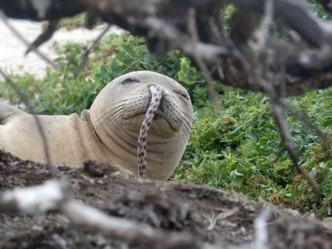 哪里有欧美幼幼资源_鳗鱼躲在海豹鼻孔里 科学家震惊 网络疯传照