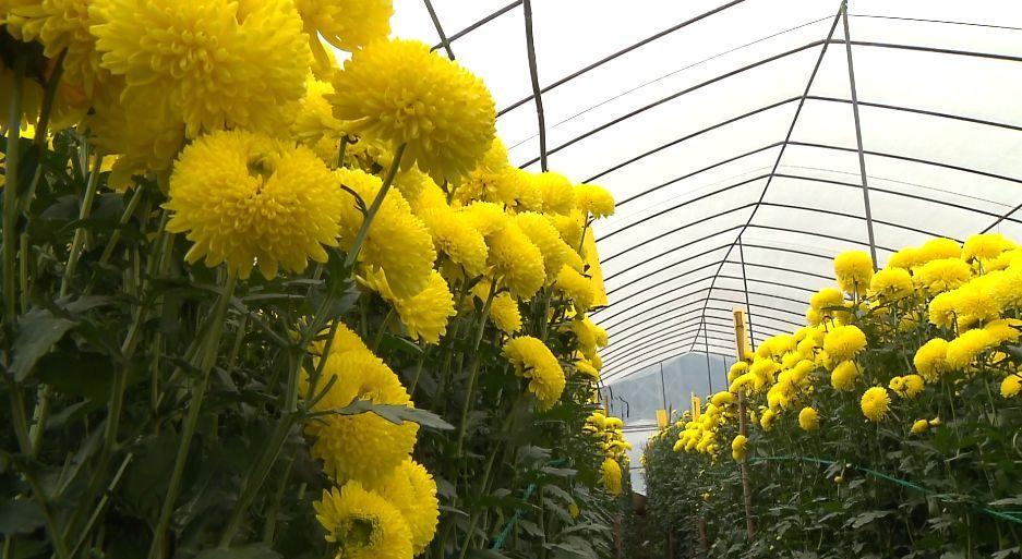 加快农业种养结构调整, 重点发展具有比较优势的蔬菜,茶叶, 生态家禽图片