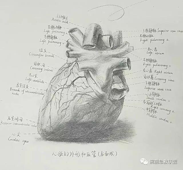 """中南医学生解剖学手绘图走红,网友:被学医耽误的""""灵魂"""