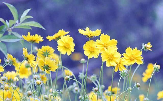 最能HOLD住幸福的十二生肖_算命说:12月上旬,运势如虹,存款蹭蹭涨,大步迎接幸福的生肖 ...