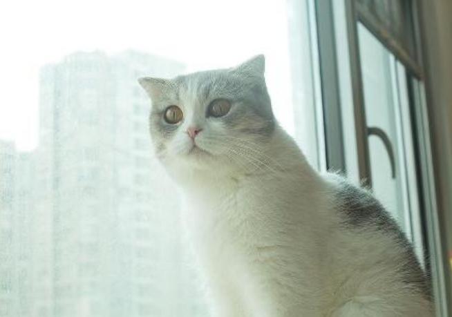 猫咪肚子里有虫该怎么办