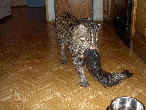 世界上最不好伺候的3种猫科动物:长相可爱,却从来不会讨好人