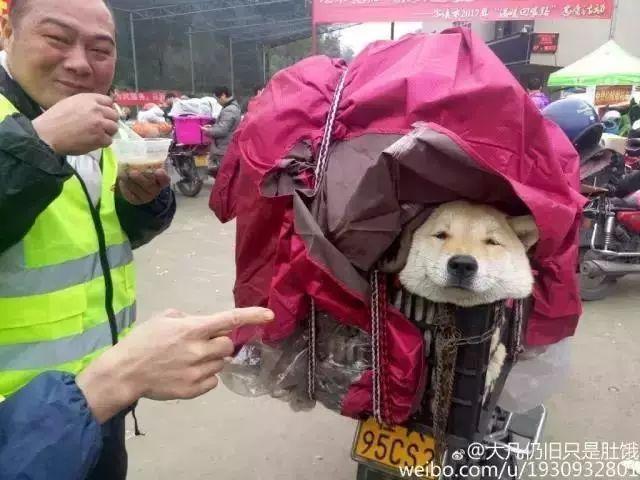 """为了更多狗狗的幸福,这位主人狠心""""遗"""