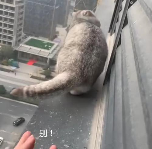 猫咪绝育后突然失踪,隔天在20楼的窗台外找到: