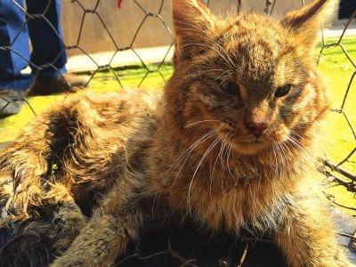 世界上最不好伺候的3种猫科动物:长相可爱,却从来不会讨好人-華夏娛樂360