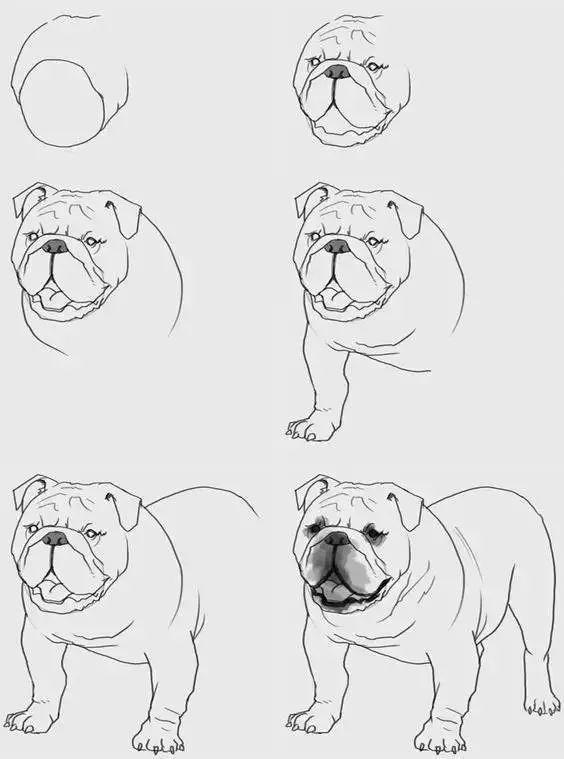 素材 简笔画动物绘画步骤