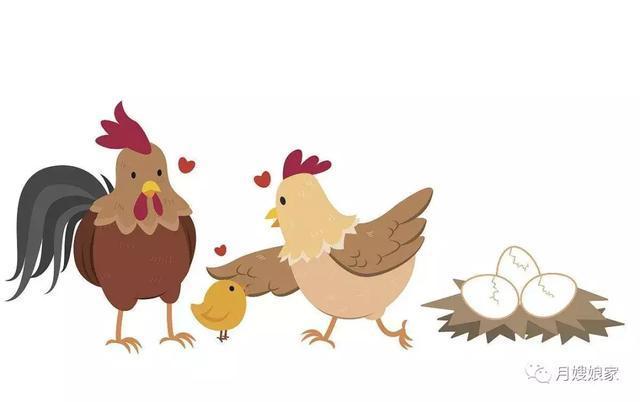 孕妇母鸡公鸡