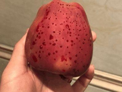 女子吃苹果,发现苹果流血,结果不犹豫啃了下去