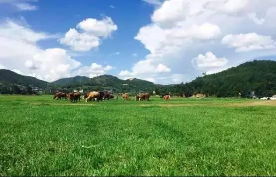 農村養豬、養牛、養羊、養雞、養驢,2019養殖哪個有前景、更賺錢?