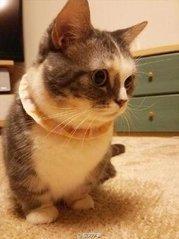 要去寵物醫院才能知道貓咪消瘦的秘密嗎?很可能是這8個原因哦! 職場 第3張