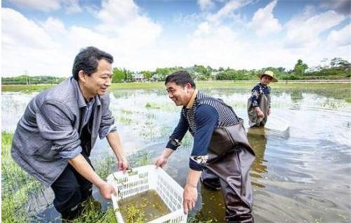 小龙虾青青草网站温度低于十度怎么投食 小龙虾青青草网站温度要求