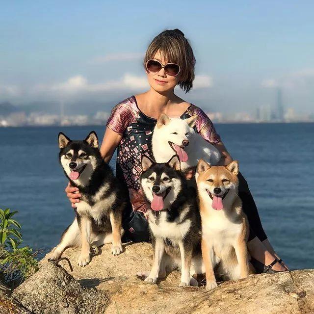 日本小姐姐养了四只柴犬!妥妥的人生赢家啊!