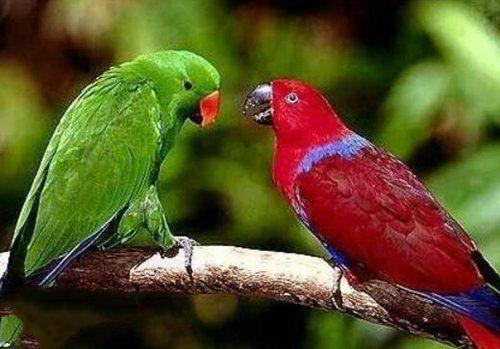 地球上10大最常见的鹦鹉,第八可以与人对话,你养了哪种?图片