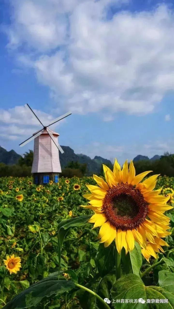 红楼之风起上林最新章节列表_达文小说网手机阅读
