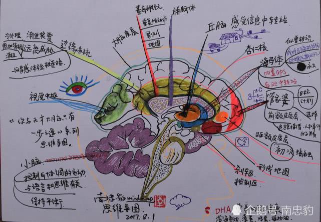 了解人类思维活动,首先要了解人类大脑结构和功能.图片