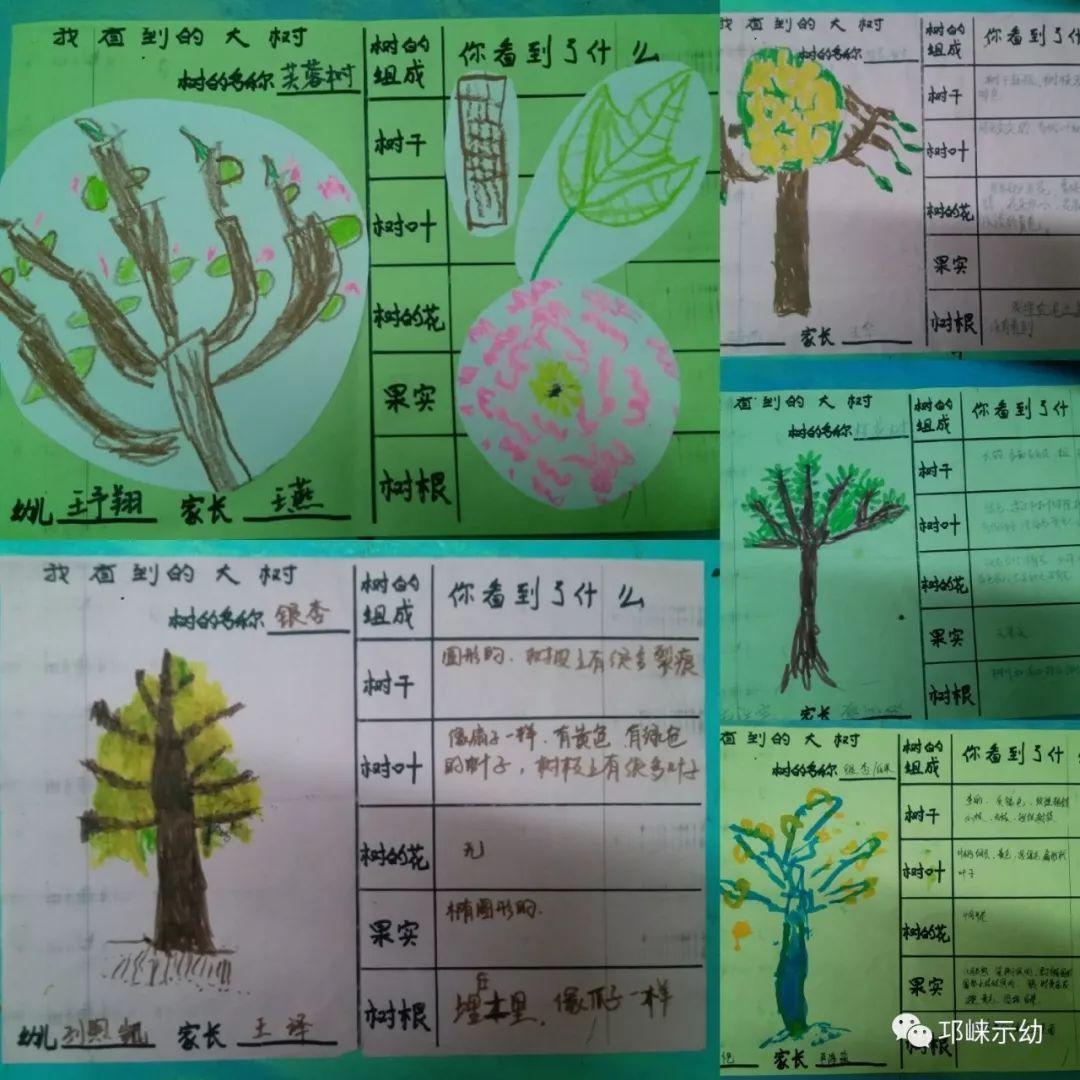 中二班主题活动--拜访大树图片