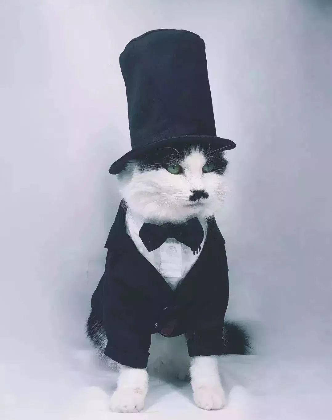 猫先生绅士的模样就像一个哲学家