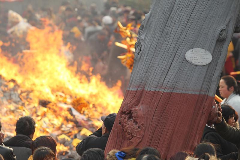 """世界上香火""""最旺""""的寺庙,500岁古树是老死还是被香火烤死?"""