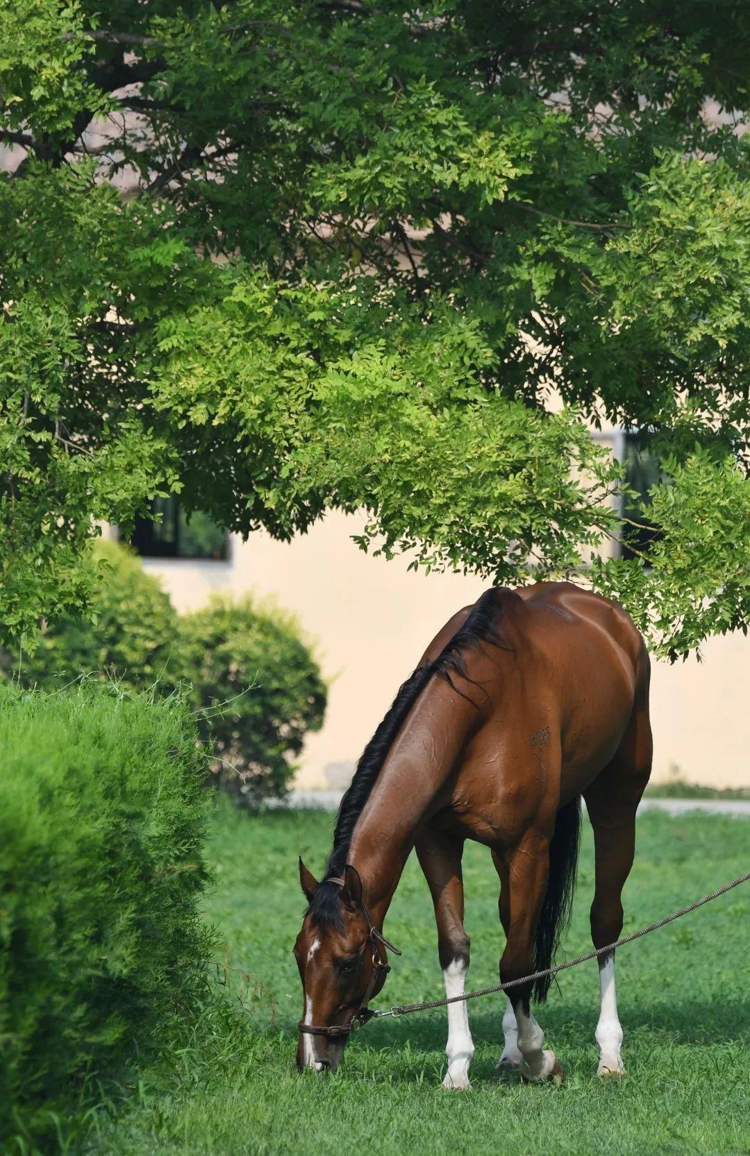 选马,不能仅仅靠一见钟情!