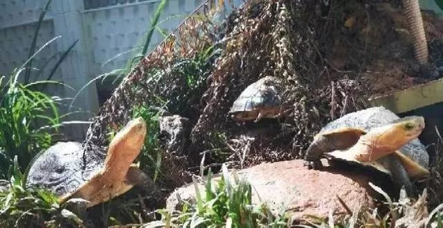 养龟池设计图晒台