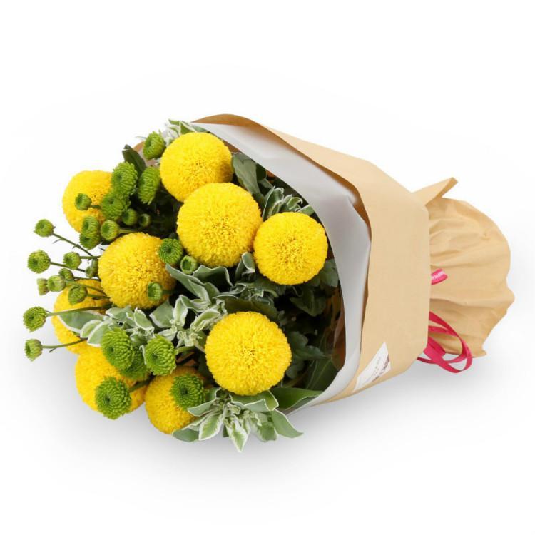 乒乓菊的繁殖图片