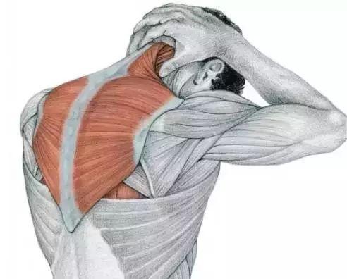 斜方肌_实用|肩颈酸痛?给您推荐一套肌肉拉伸操_症状