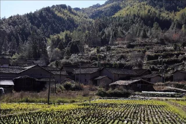 温州鱼缸批发市场一群外地青年在一个留守村靠卖甲虫带活了整个村子 温州水族批发市场 温州龙鱼第1张