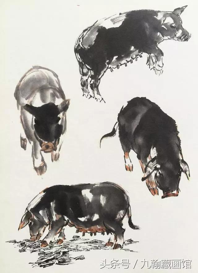 轻松学国画,十二生肖之猪的完整画法,快收藏吧!图片
