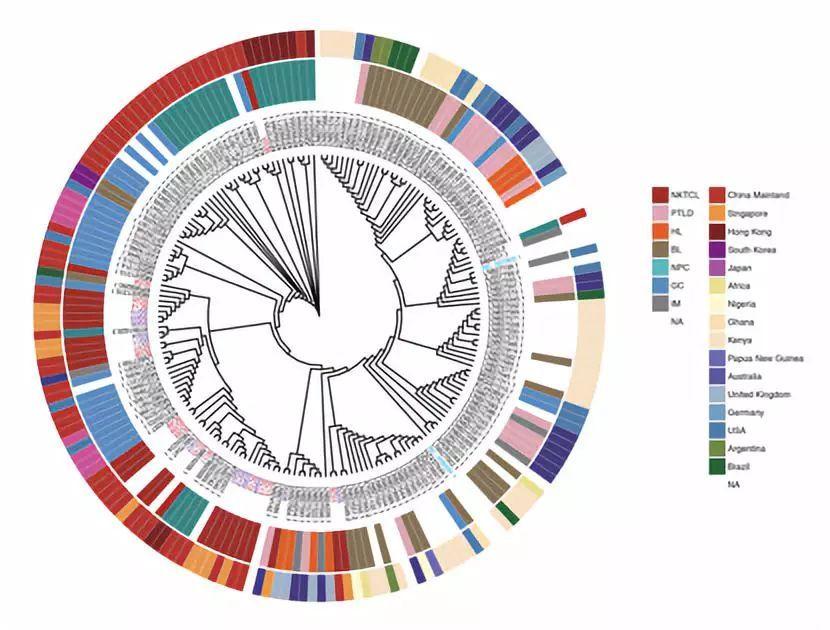 环�y�!�*�x��X�nK�_贝锦新/曾益新合作组首次在多组学水平绘制了nk/t细胞